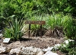 Medicinal Plant Beds: Cold and Flu