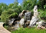 Freshwater Wetland Waterfall