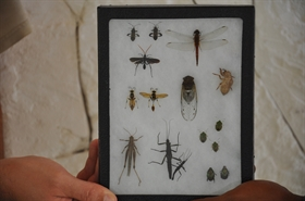 Development of the Insect Collection